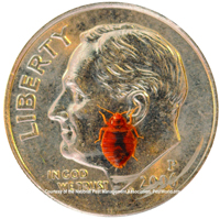 Bed bug on a dime